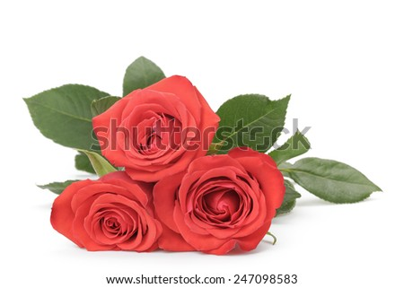 three fresh red roses isolated on white background