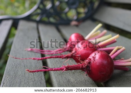 Three freshly picked beetroots, Chioggia, an Italian heirloom variety, with remains of stems attached. Set on a rustic green wooden garden bench base on a landscape format.