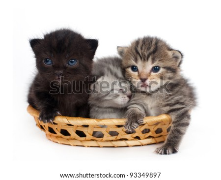 Three kittens in a basket on a white background