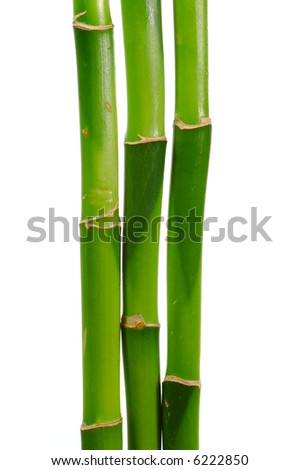 Three Lucky Bamboo Stems. Isolated on White.