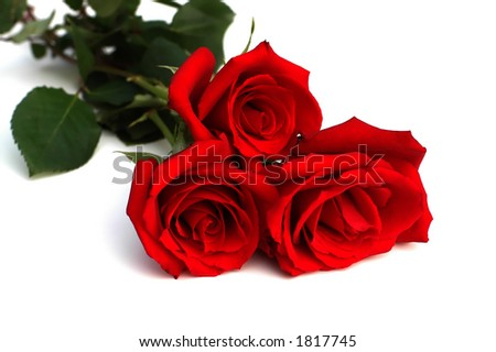 Three red roses on white