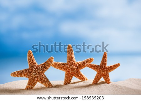 three starfish  with ocean , beach and seascape, shallow dof