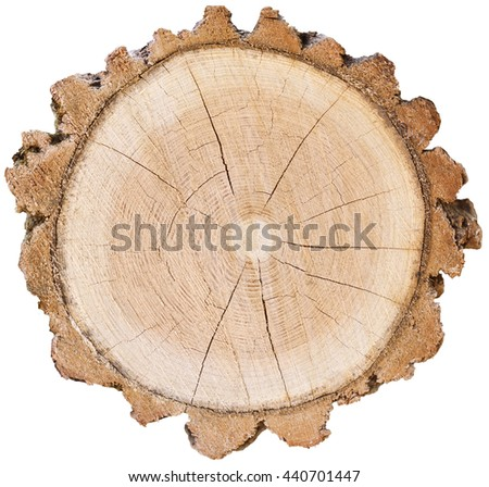 Three Wood Slice Cross Section With Tree Rings That Show Age Organic  Background Isolated Tree Stump