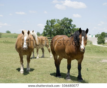 three working horses on a farm on a summer day