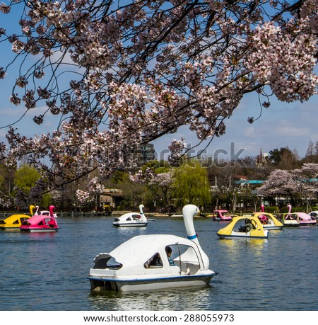 TOKYO,JAPAN-APRIL 2: People  join the swan boat in  Hanami festival at Ueno park  Tokyo,Japan on April 2,2015.Hanami festival will start when cherry blossom full bloom.