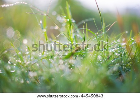Top of grass and water drops