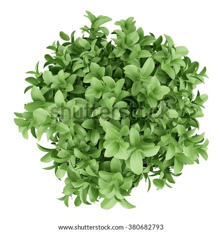 top view of plant in black pot isolated on white background