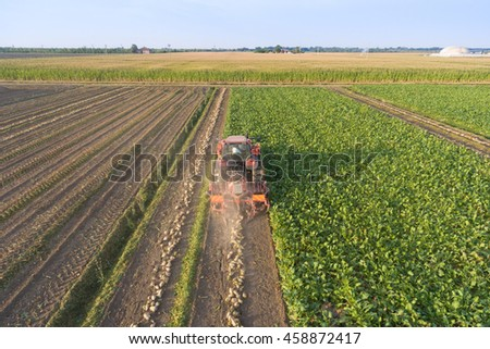 Top view of the tractor in the field of sugar beet. Aerial view.