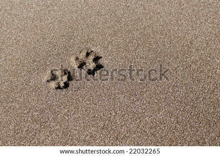 Trace of a dog on sand