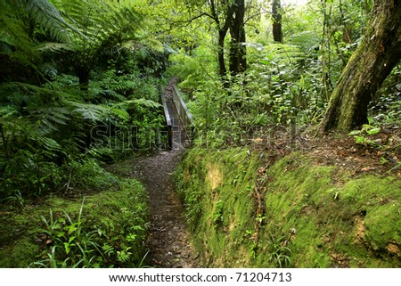Trail in lush green tropical forest