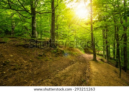 trail through deep green and  ancient forest