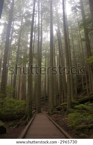 Trail through forest