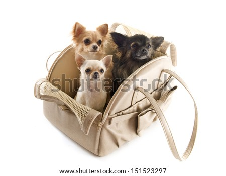 travel bag with chihuahuas in front of white background