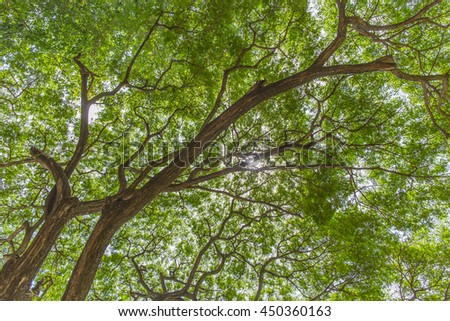 Tree branch and green leave. swing up view