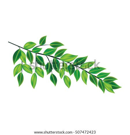 tree branch green leaves isolated on white background art abstract  bitmap image