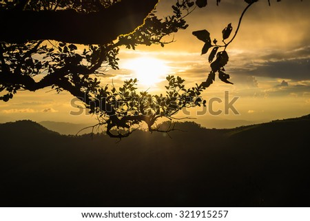 Tree branch on colorful sky in the evening over mountains.