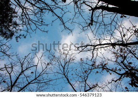 tree branches against cloudy sky