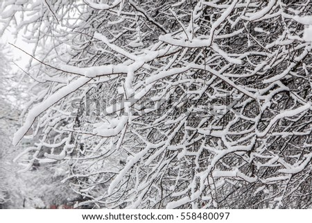 tree branches covered with snow after snowfall close up