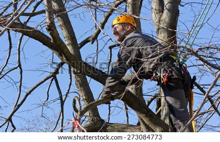 Tree Climber Pruning Branches