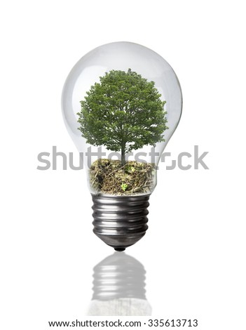 Tree in a light bulb on white