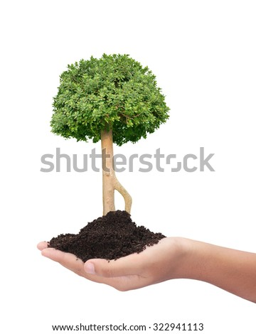 Stages growing tree exposed root system stock vector for What do we use trees for