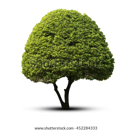 tree isolated on white background clipping path.