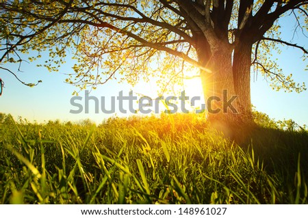 Tree on a green meadow at sunset