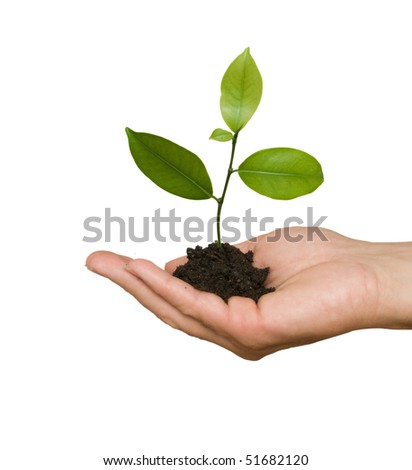 tree seedling in hand as a symbol of nature protection