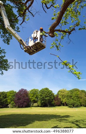 Tree surgeon or garden maintenance worker using a cherry picker to prune a leafy green spring tree in a park trimming off branches with a chain saw from the elevated platform