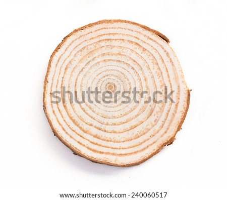 tree trunk cross section, isolated on white�£??