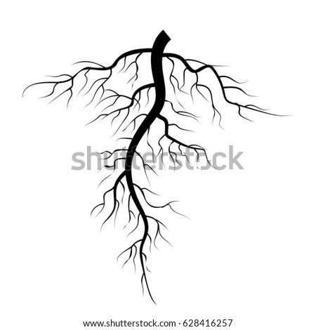 Brown Tree Root On White Background Stock Vector 425122198 ...