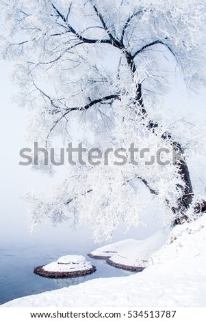 Tree with snow in Winter, Wusong Island in China