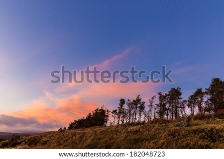 Treeline at sunset in Wicklow Mountains