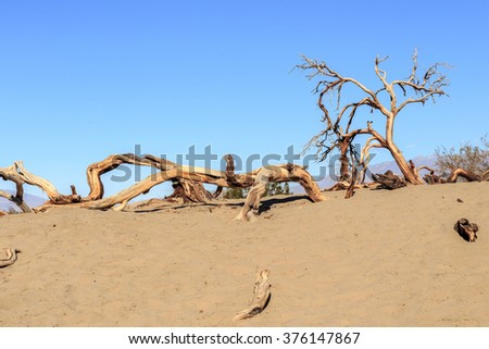 Trees and Trunk in Sand Dunes