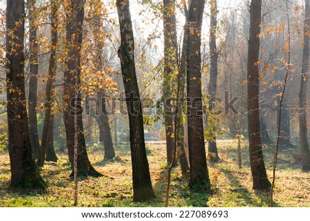 Trees at forest
