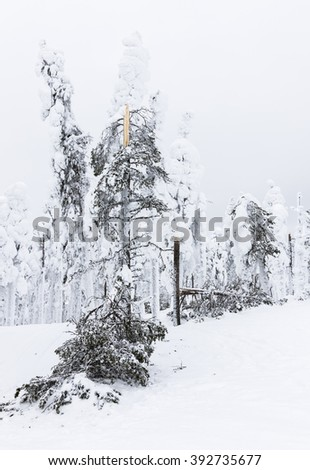 Trees broken by snow