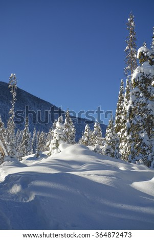 Trees in a snow on a sunny winter day. Winter forest with mountain view in Manning Park, BC.