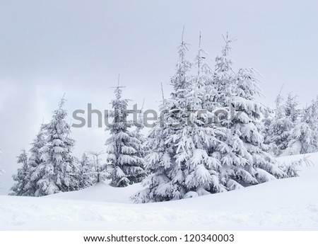 Trees in forest at the winter time. Natural winter landscape