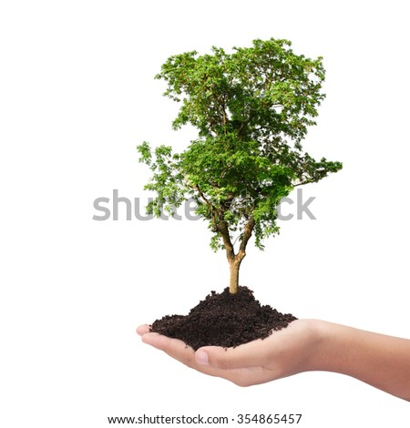 Trees in hand Environmental Conservation concept isolated on white background  this has clipping path.