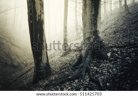 trees in misty forest landscape