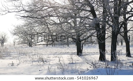 trees in snow winter field snowing nature landscape sunlight