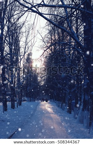 trees pathway in winter