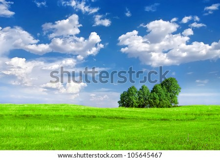 trees under blue sky