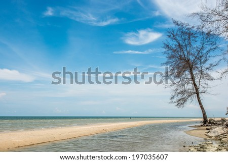 Tropical beach with tree