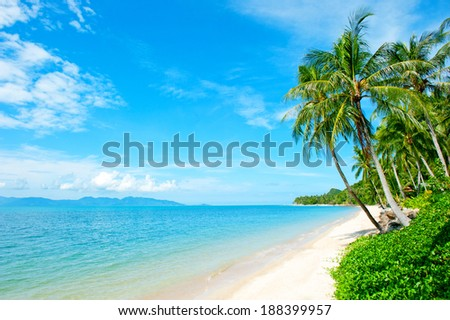 Tropical coast, beach with hang palm trees