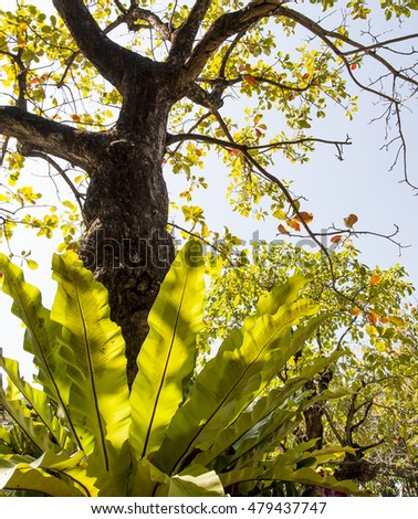 Honeycomb hanging on tree stock photo 126875897 shutterstock - Flowers that grow on tree trunks ...