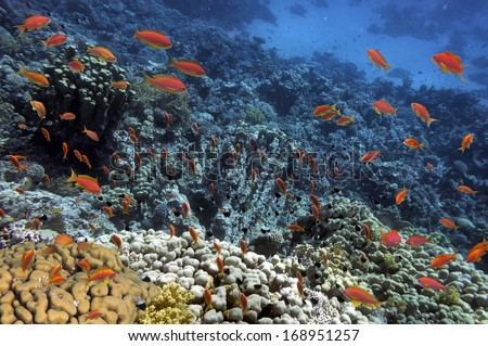 Tropical Fish on coral reef.