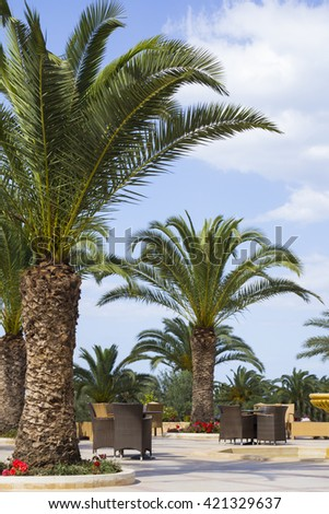 Tropical garden in Tunisia