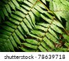 Tropical green leaves of fern under sunlight - stock photo