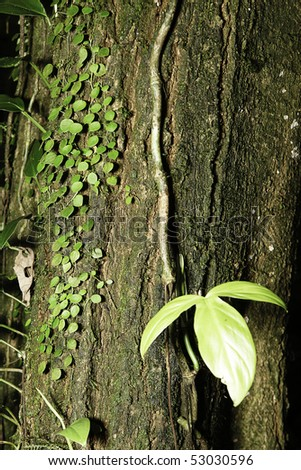 tropical rain forest trees detail evergreen humid amazon forest